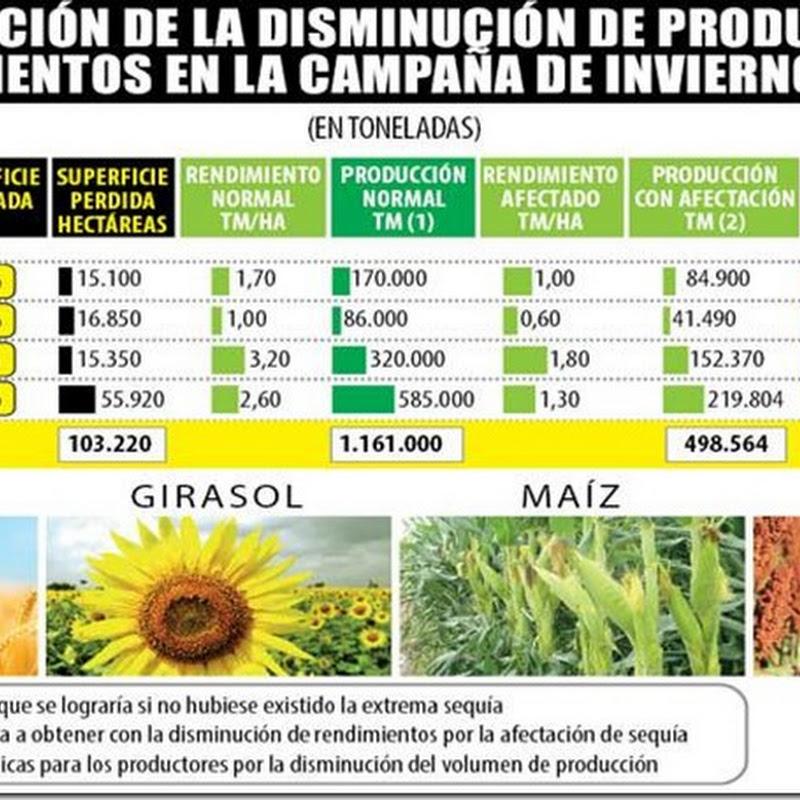 Sequía hace estragos en el agro boliviano: 103 mil Ha perdidas