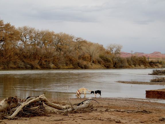 Daisy and Boulder at the Green/San Rafael confluence