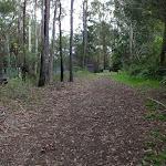 Blackwattle trail (152656)