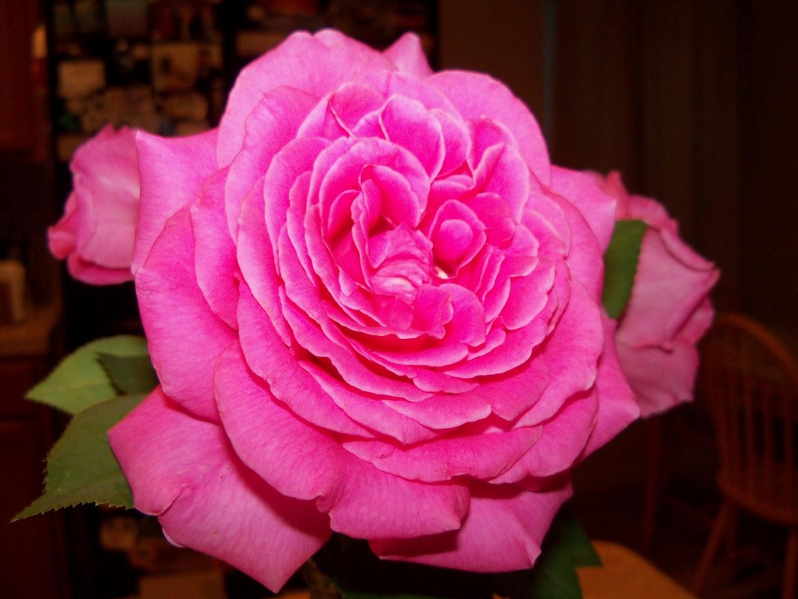 Bouquets - 101_3238.JPG