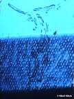"""Körper"", Glas geätzt, Schwarzlot, Kunststoffgeflecht 2009"