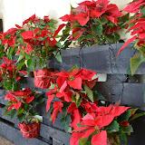 El Nadal ens inspira... - DSC_0046.JPG