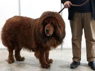 teuerster hund