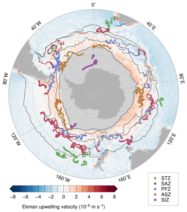 "Map showing paths of more than 100 oceanic floats around Antarctica. Dark gray is land, and light gray is sea ice. Instruments colored dark orange in the ""Antarctic Southern Zone"" found higher-than-expected outgassing of carbon dioxide. Graphic: Alison Gray / University of Washington"