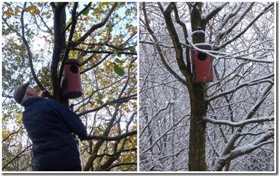 Tawny Owl nest boxes