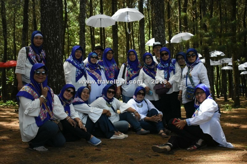 BWI Travel - Tour Wisata Banyuwangi - Alas Pinus Omah Kayu