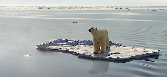 Polar bear on small ice floe