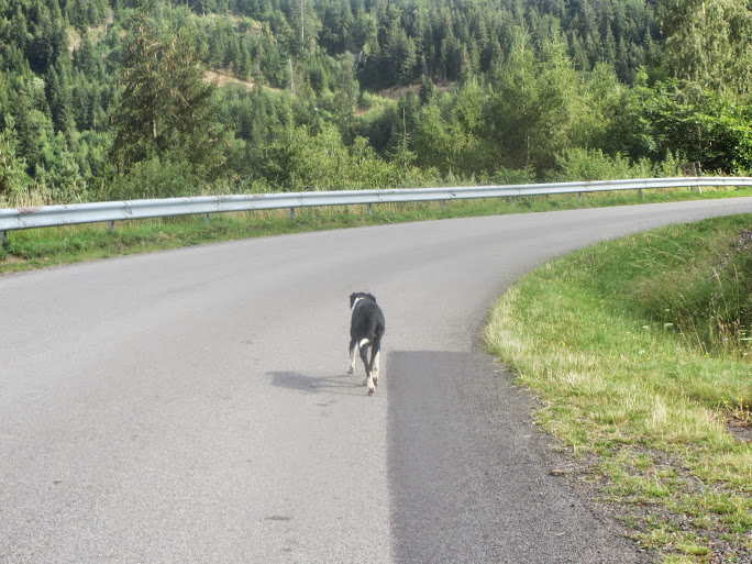 [CR] through the Massif Central by the road, july 2014 ! - Page 3 IMG_0633