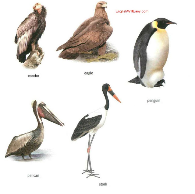 By Photo Congress || Birds Name In English And Malayalam