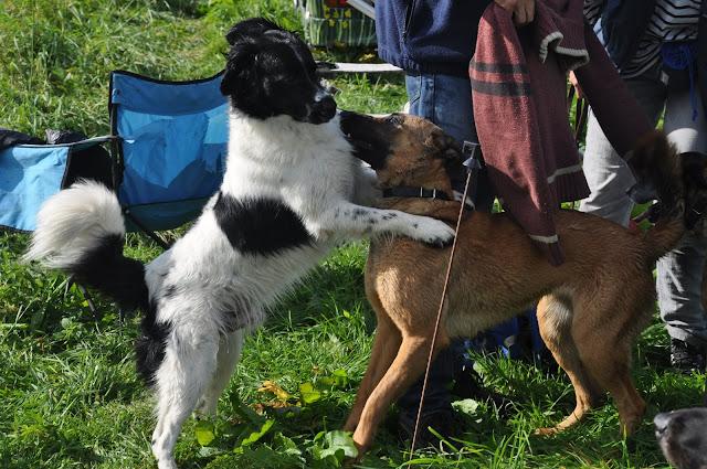 Survival voor Baas en Hond 2012 - DSC_0112.JPG