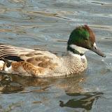 Livingston Ripley Waterfowl Conservancy - P1020540.JPG