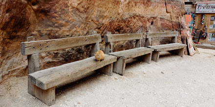 Photo: There were a number of cats living in Petra