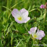 2013 Spring Flora & Fauna - IMGP6325.JPG