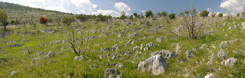 Karge Büsche auf Wiesen vollen weißer Felsen