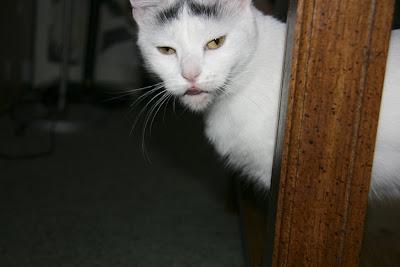 demon kitty!