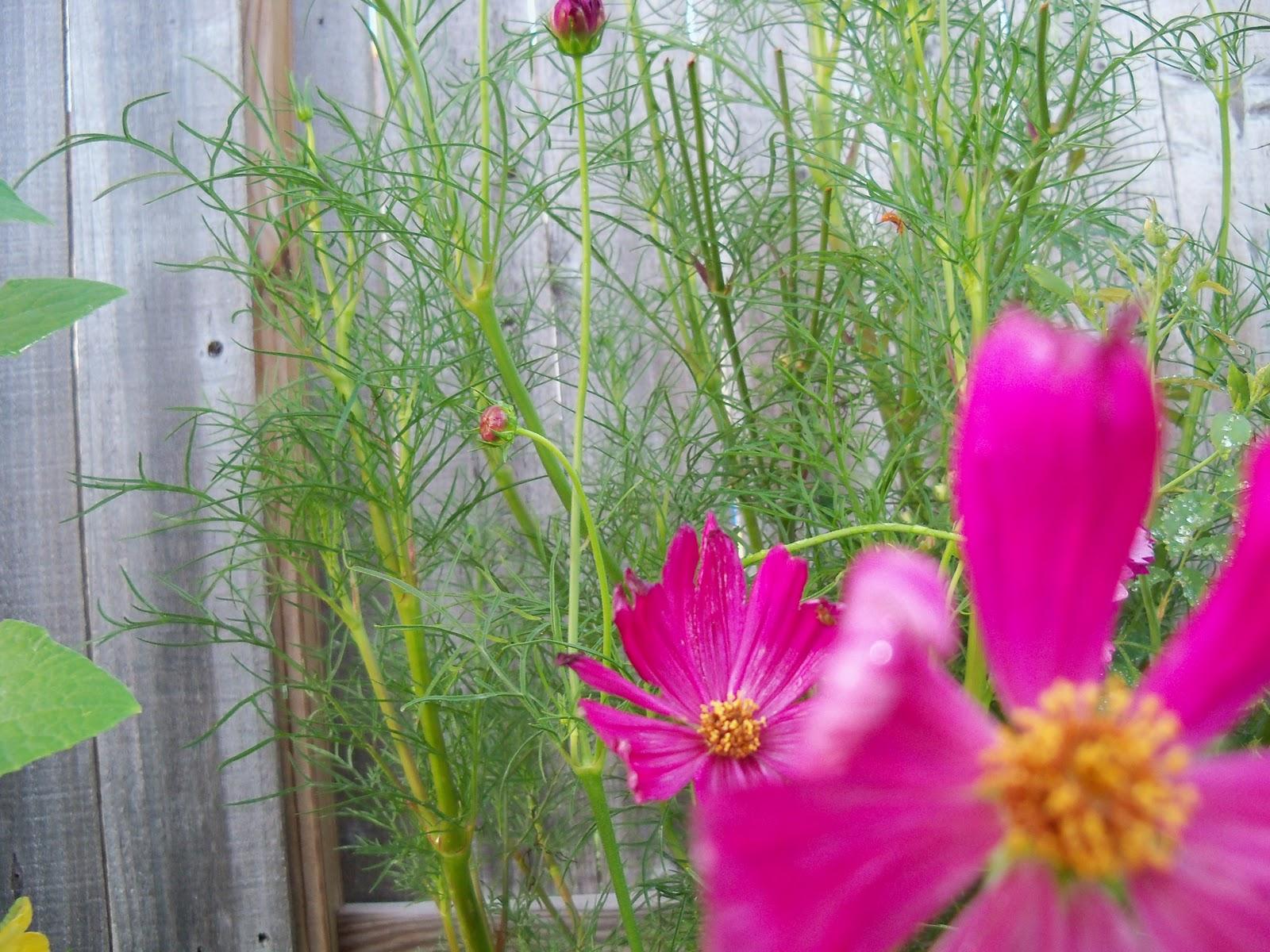 Gardening 2010, Part Three - 101_3969.JPG