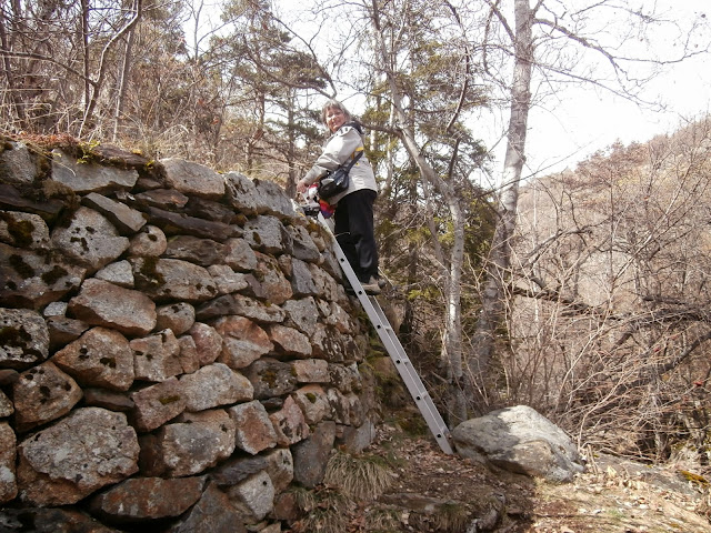 Original escalera en medio del bosque