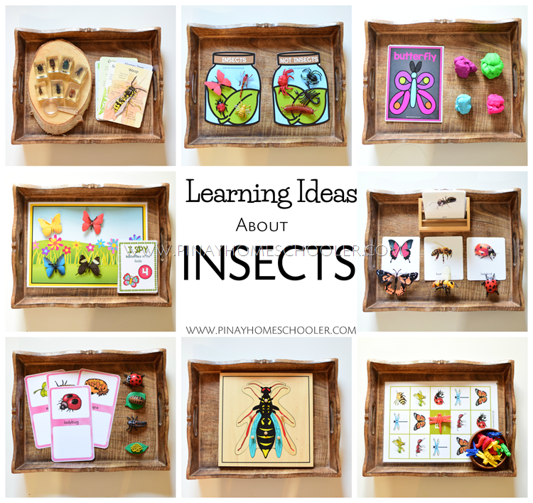 Learning Ideas About Insects