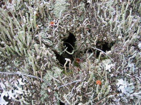 16 lichen