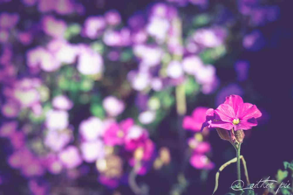 PurpleSentinel_byAEtherPie