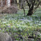 wiosna w Przelewicach