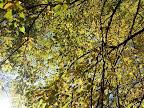 tahle podzimní nám sedí k barvě stránek :-D
