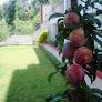 sunrise villa plums.jpg