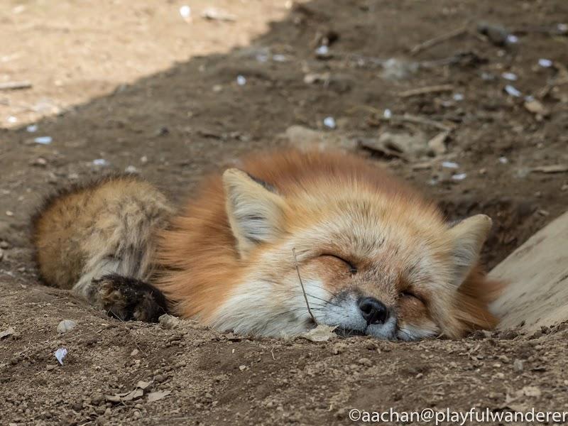 foxvil (24 - 70).jpg