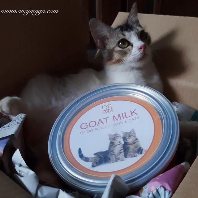 susu untuk kucing