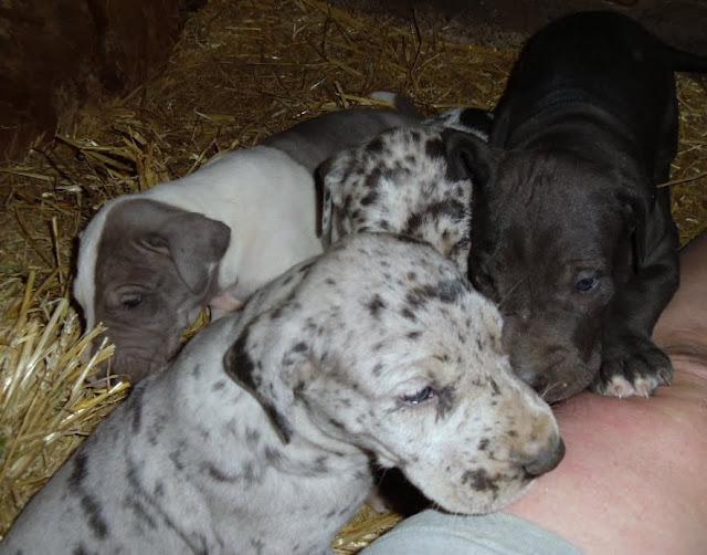 Gramma's lap-puppies:-)