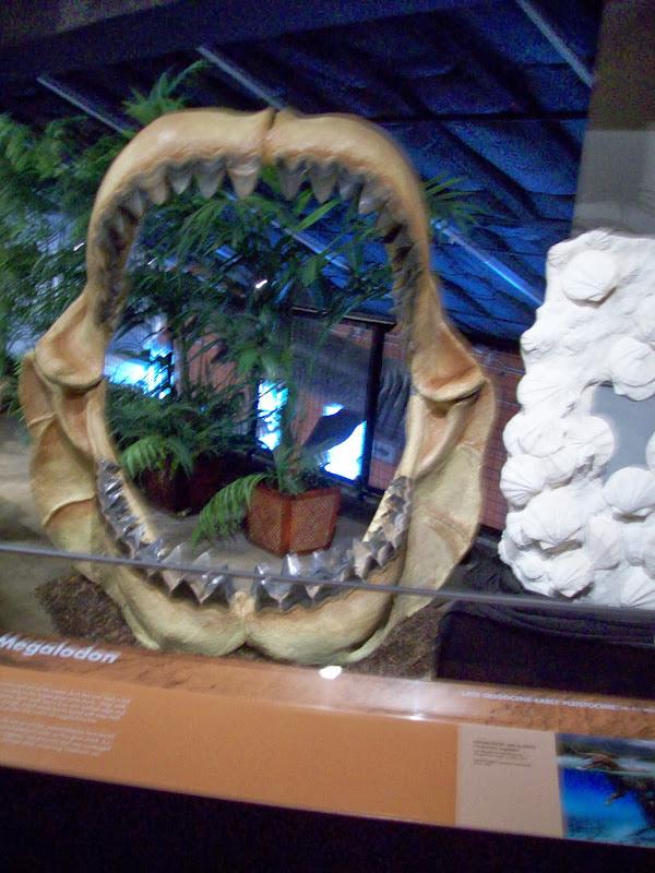 Houston Museum of Natural Science, Sugar Land - 114_6690.JPG