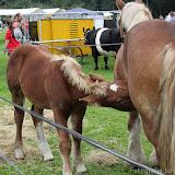 Paard & Erfgoed 2 sept. 2012 (63 van 139)