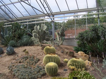2010.08.13-022 plantes de climat sec