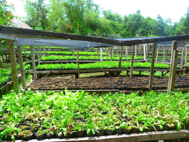 Panglao island, Bohol Bee Farm