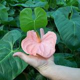 Cultivo de plantas de interior. - 100_0257.JPG