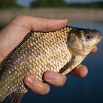 20150613_Fishing_Virlia_007.jpg
