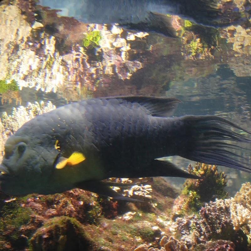 Aquarium_30.jpg