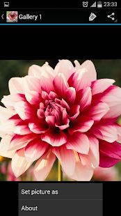 Flowers - náhled