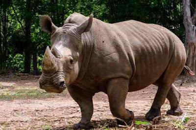 गैंडों के बारे में 17 रोचक तथ्य | 17 Interesting Facts About Rhinos That You Didn't Know