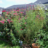 Gardening 2010, Part Three - 101_5117.JPG
