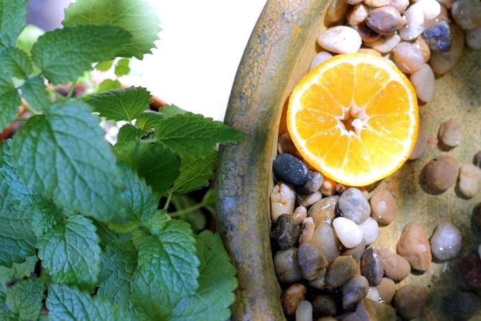 DIY Butterfly Bath Lemon Balm & Citrus