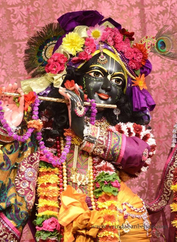 ISKCON GEV (Wada) Deity Darshan 23 Jan 2016 (1)