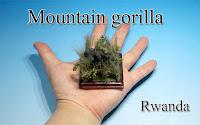 Mountain gorilla ‐Rwanda‐