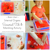 Internal Organs Sensorial Tub and Matching Activity