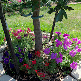 Gardening 2011 - 100_7824.JPG
