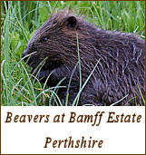 Bamff Beaver Project and Year round self-catering 2/3 bedroom holiday cottage on a traditional country estate in Perthshire Scotland