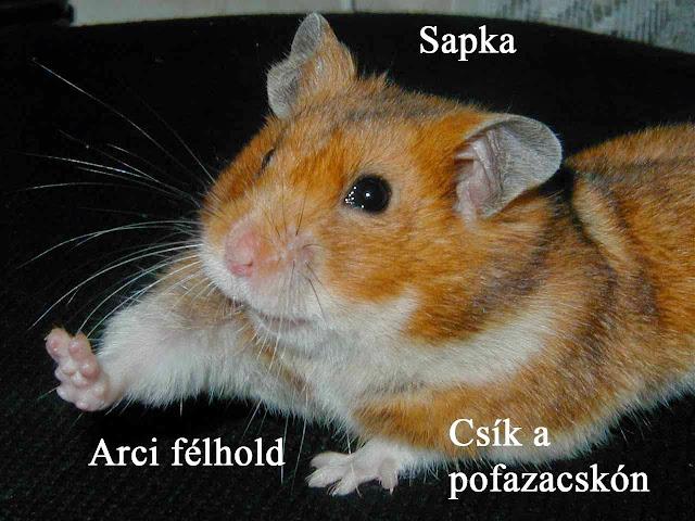 agouti_jegyek1