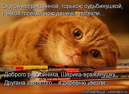 1414135155_kotomatricy-1