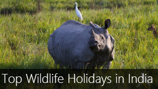 Top 9 Wildlife Holidays in India