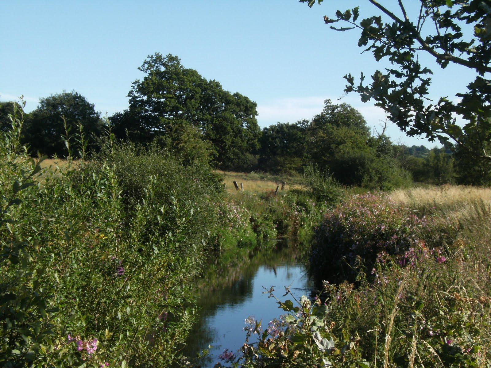 DSCF9323 River Medway near Ashurst